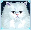 kitty glitter cat