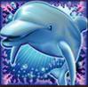 dolphin reef wild