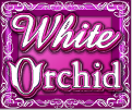 white orchid wild
