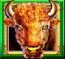 buffalo spirit wild