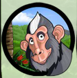 rumble in the jungle monkey