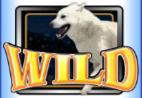 wild huskies wild