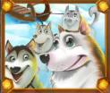 ice run dogs