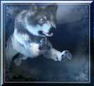 mystic wolf wild