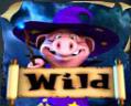 pig wizard wild