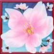 cherry blossom scatter