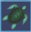 under the sea turtle