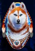 alaskan husky tall