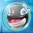 whale winnings wild