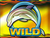 dolphin gold gold wild
