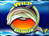 dolphin gold wild