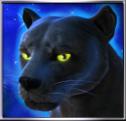 panther moon wild