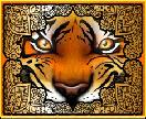 tiger treasures wild
