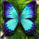 flutter pays wild