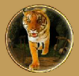 jewel journey tiger
