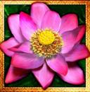 thai flower wild