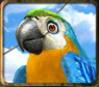 barbary coast parrot