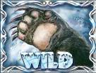 siberian wolf wild