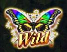 3-butterflies-wild