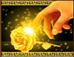 goldify-rose