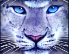 Snow Leopard Slots Review