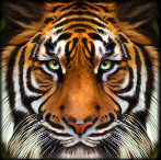 Tiger Tiger Slots Review