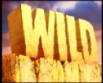 Dino Dollars Slots Review